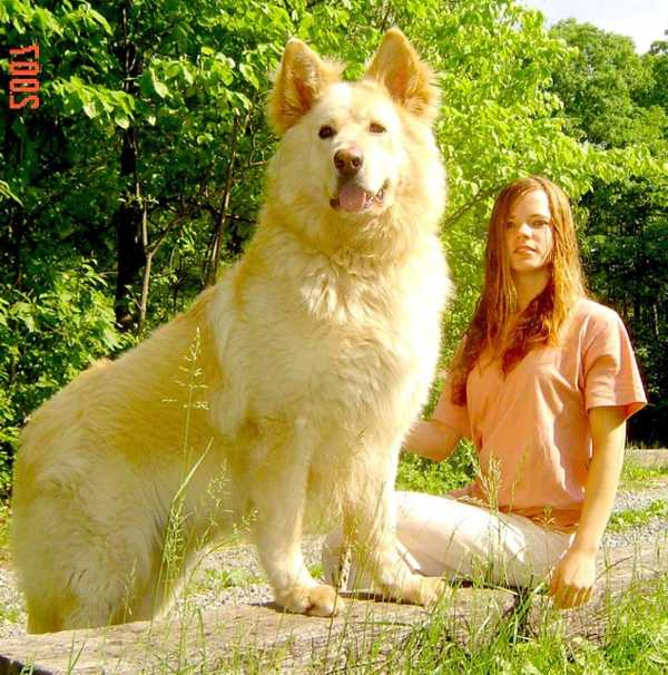 biggest-dog-breed_1404099609